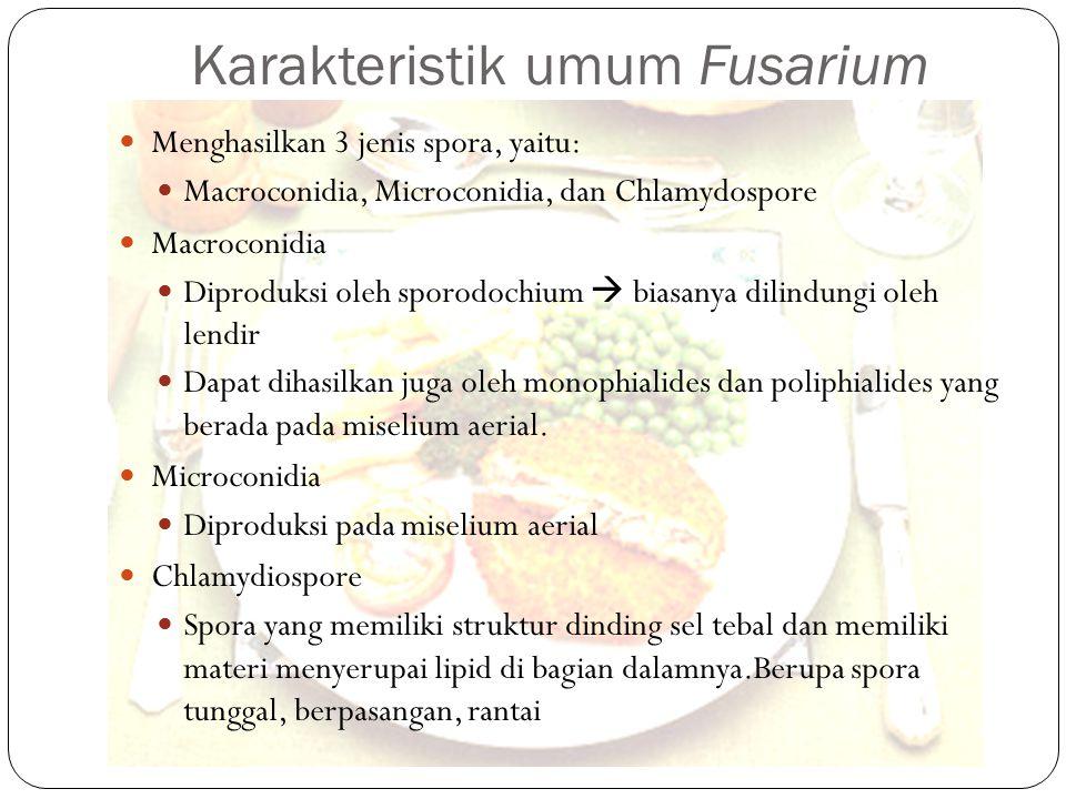 Karakteristik umum Fusarium