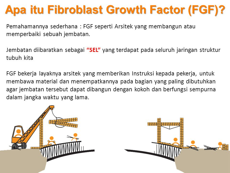 Apa itu Fibroblast Growth Factor (FGF)