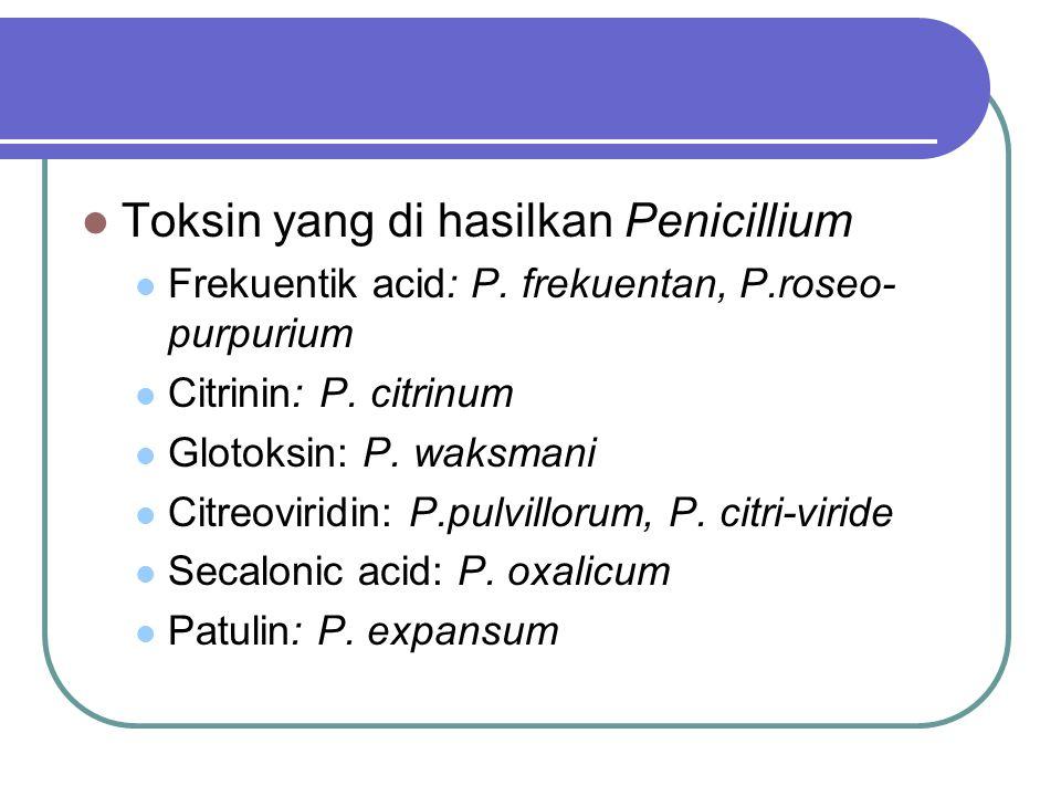 Toksin yang di hasilkan Penicillium