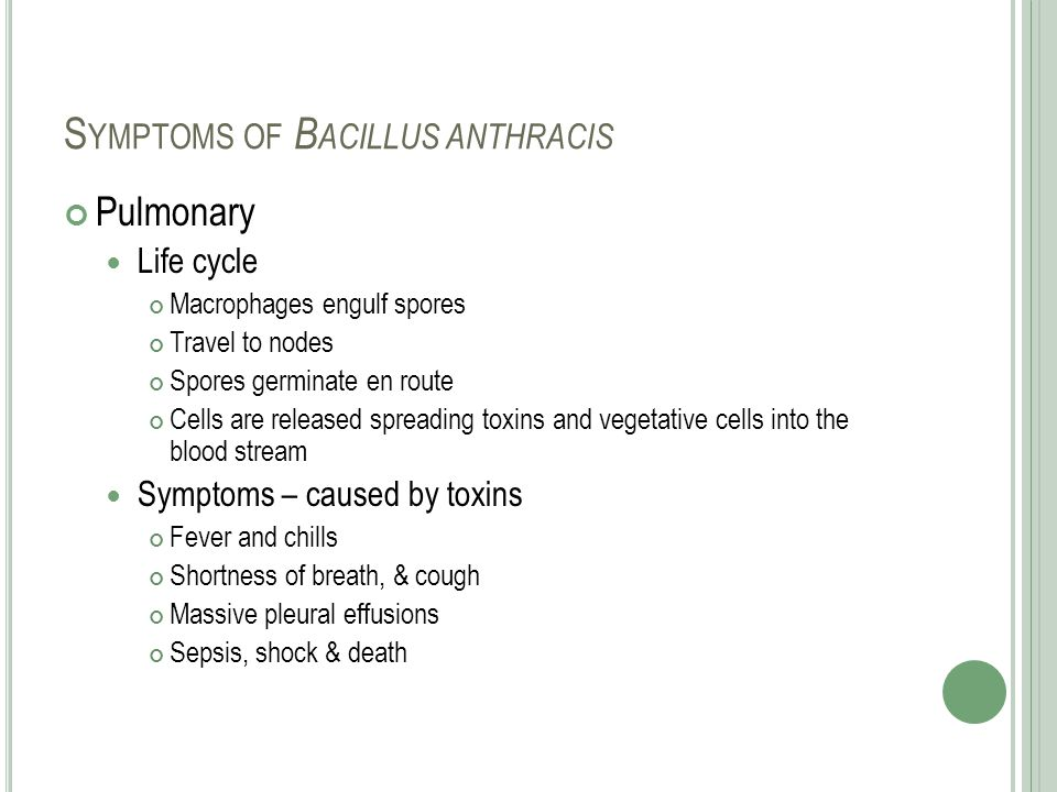 Symptoms of Bacillus anthracis