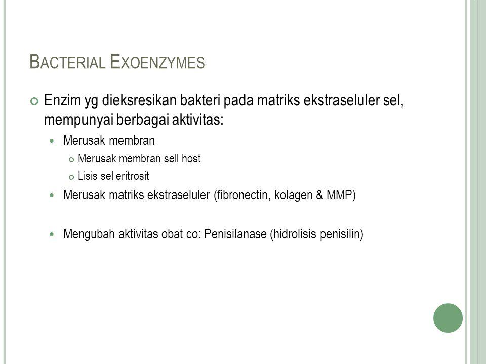 Bacterial Exoenzymes Enzim yg dieksresikan bakteri pada matriks ekstraseluler sel, mempunyai berbagai aktivitas: