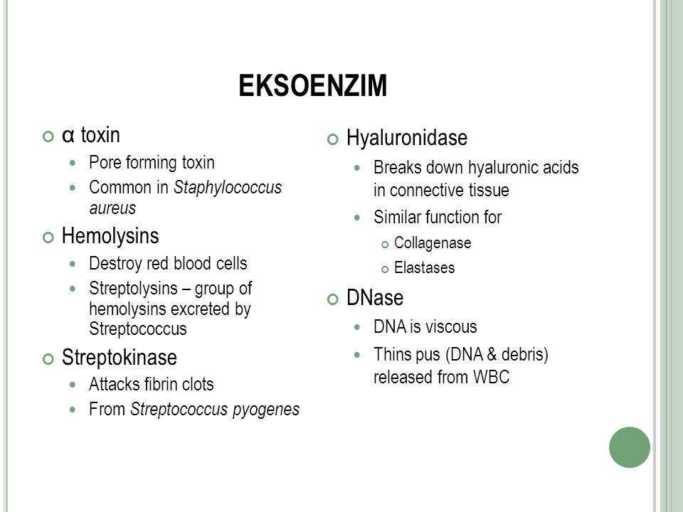 EKSOENZIM α toxin Hemolysins Streptokinase Hyaluronidase DNase