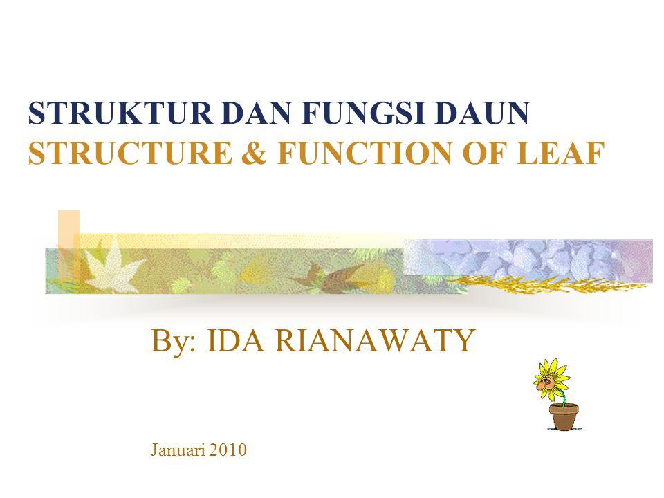 STRUKTUR DAN FUNGSI DAUN STRUCTURE & FUNCTION OF LEAF
