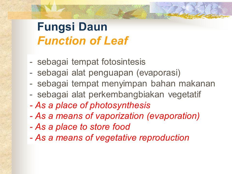 Fungsi Daun Function of Leaf