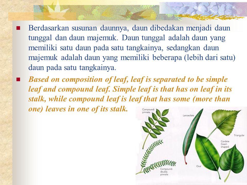 Berdasarkan susunan daunnya, daun dibedakan menjadi daun tunggal dan daun majemuk. Daun tunggal adalah daun yang memiliki satu daun pada satu tangkainya, sedangkan daun majemuk adalah daun yang memiliki beberapa (lebih dari satu) daun pada satu tangkainya.