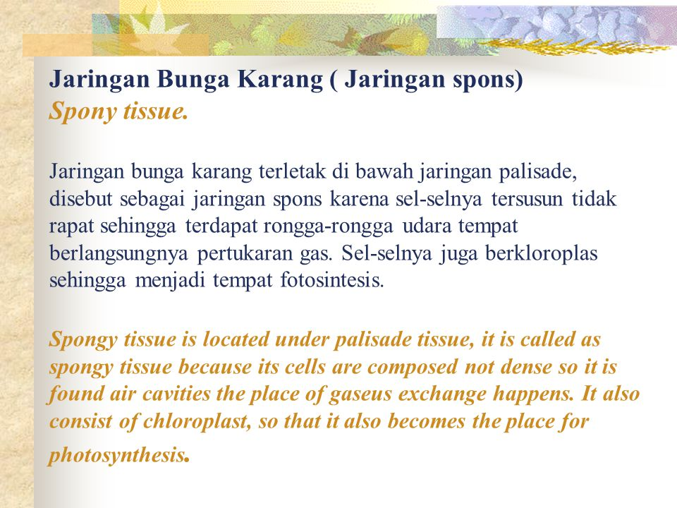 Jaringan Bunga Karang ( Jaringan spons) Spony tissue.