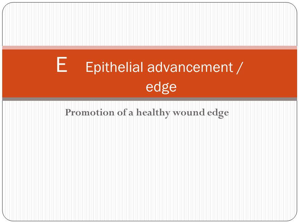 E Epithelial advancement / edge