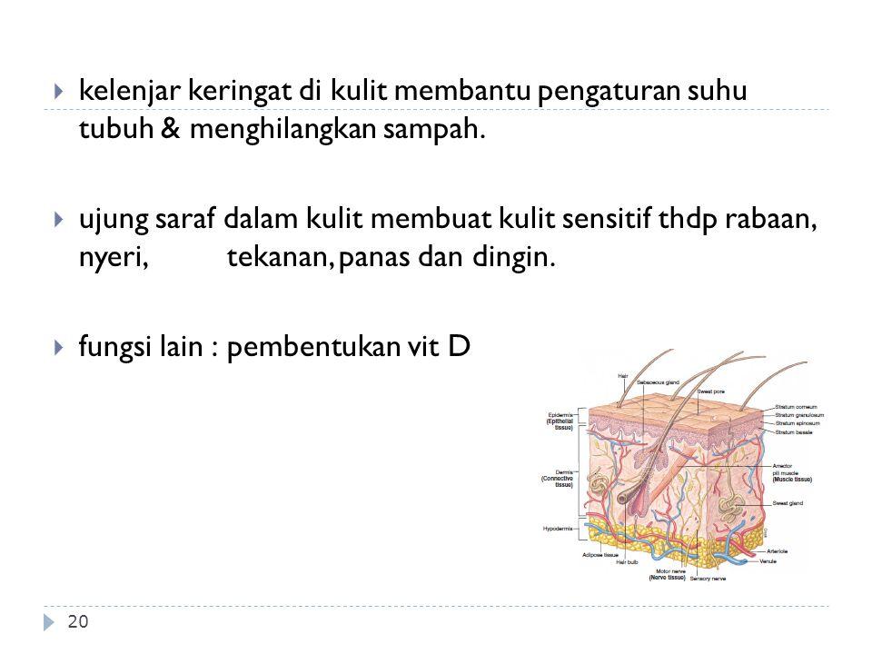kelenjar keringat di kulit membantu pengaturan suhu tubuh & menghilangkan sampah.