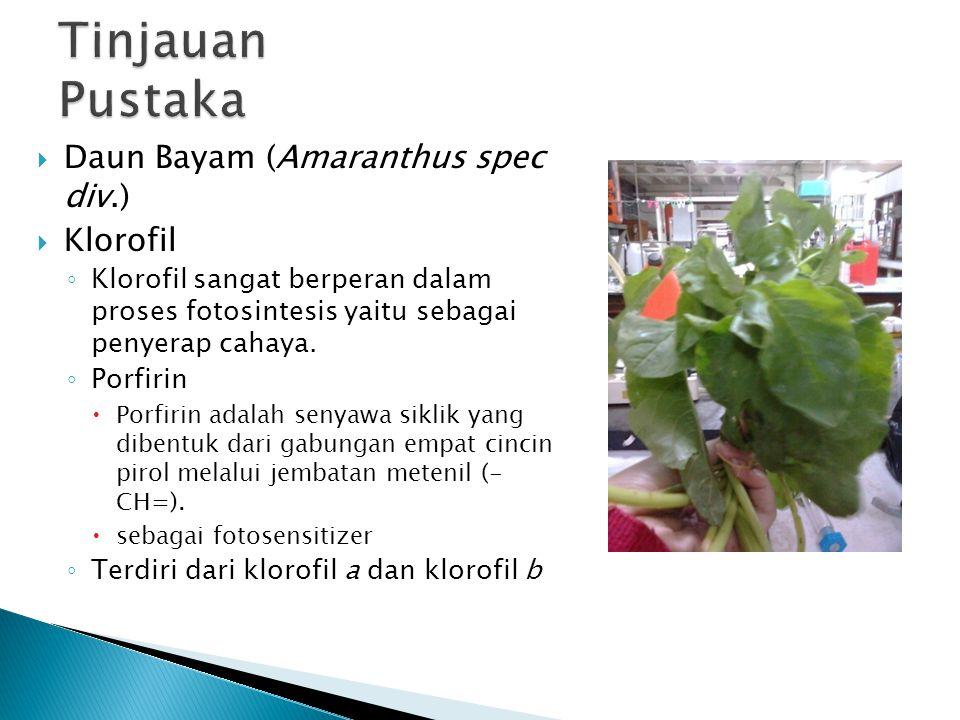 Tinjauan Pustaka Daun Bayam (Amaranthus spec div.) Klorofil