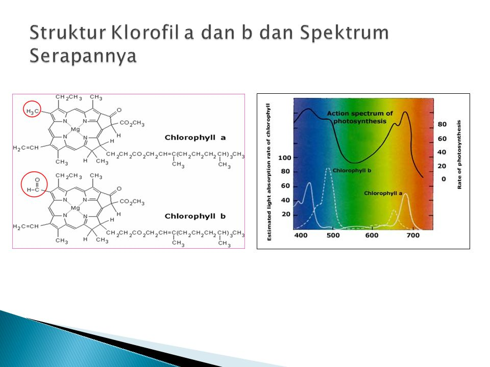 Struktur Klorofil a dan b dan Spektrum Serapannya