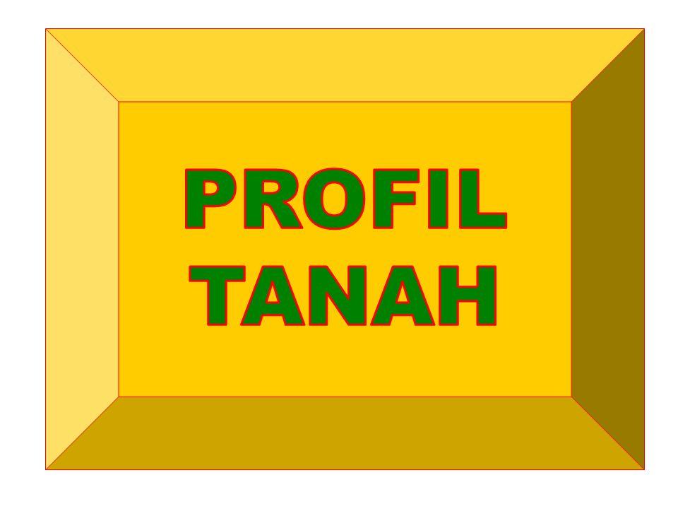 PROFIL TANAH