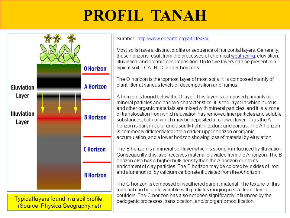 PROFIL TANAH Sumber: http://www.eoearth.org/article/Soil.