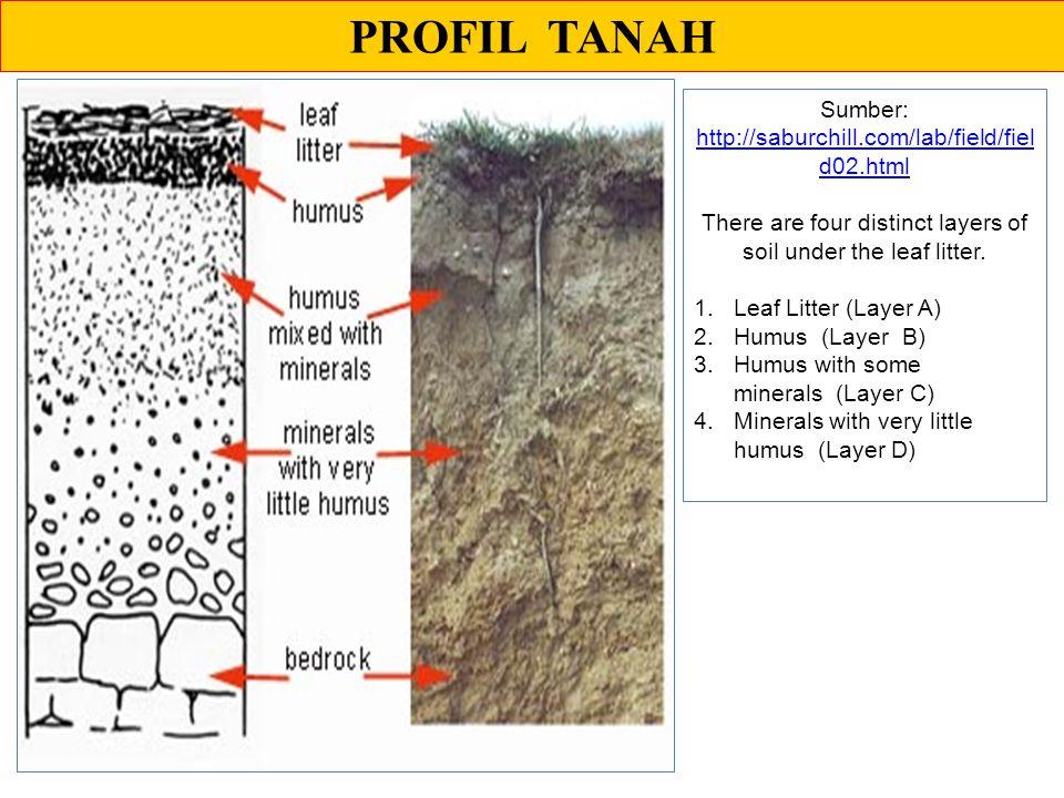 PROFIL TANAH Sumber: http://saburchill.com/lab/field/field02.html