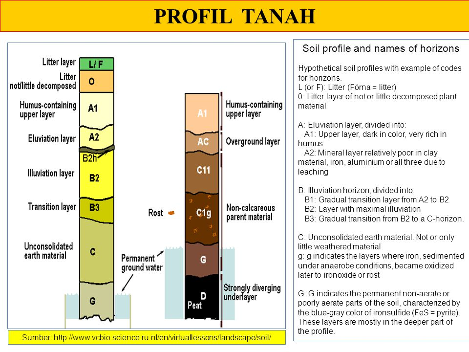Soil profile and names of horizons
