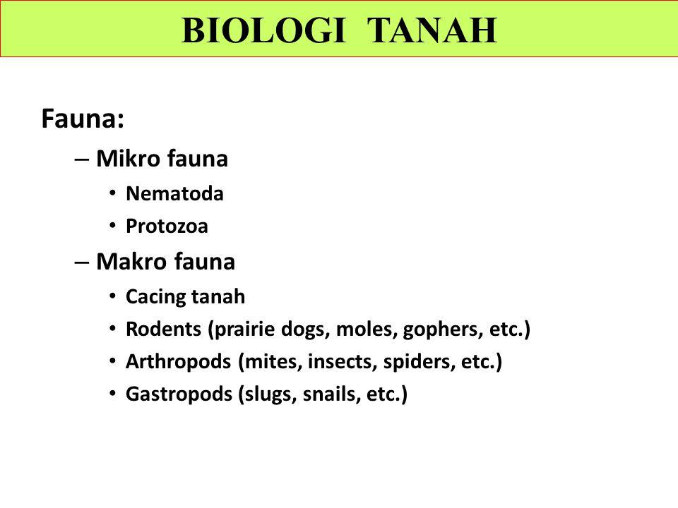 BIOLOGI TANAH Fauna: Mikro fauna Makro fauna Nematoda Protozoa