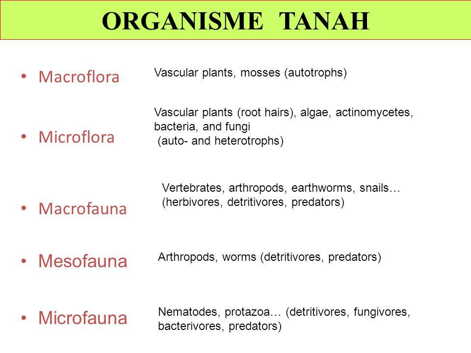ORGANISME TANAH Macroflora Microflora Macrofauna Mesofauna Microfauna