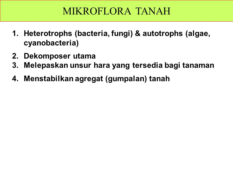 MIKROFLORA TANAH Heterotrophs (bacteria, fungi) & autotrophs (algae, cyanobacteria) Dekomposer utama.