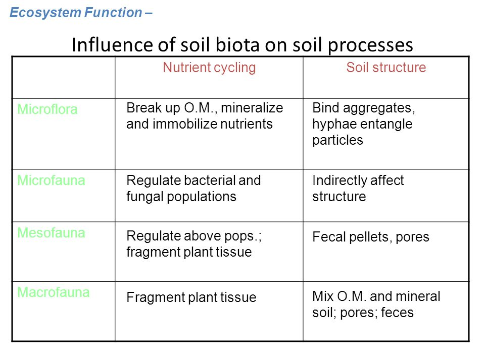 Influence of soil biota on soil processes