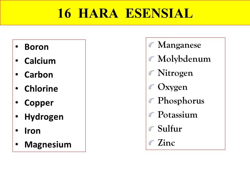 16 HARA ESENSIAL Manganese Boron Molybdenum Calcium Nitrogen Carbon