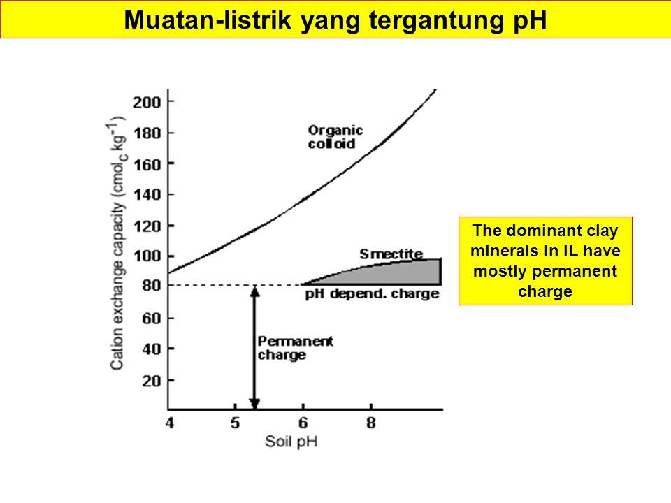 Muatan-listrik yang tergantung pH