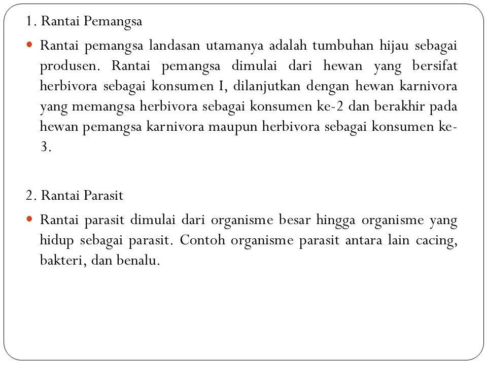 1. Rantai Pemangsa