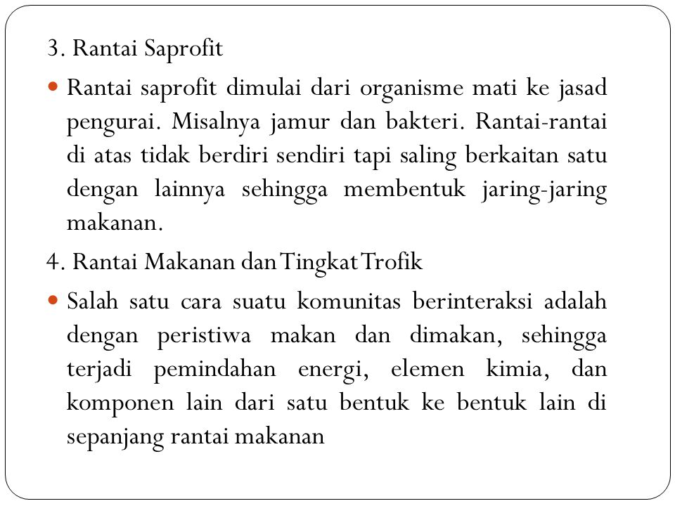 3. Rantai Saprofit