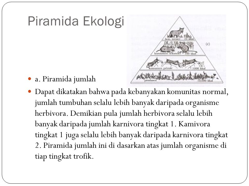 Piramida Ekologi a. Piramida jumlah