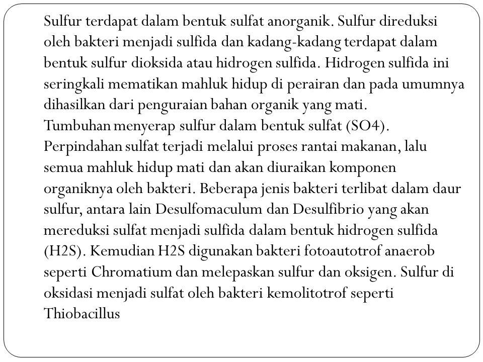 Sulfur terdapat dalam bentuk sulfat anorganik
