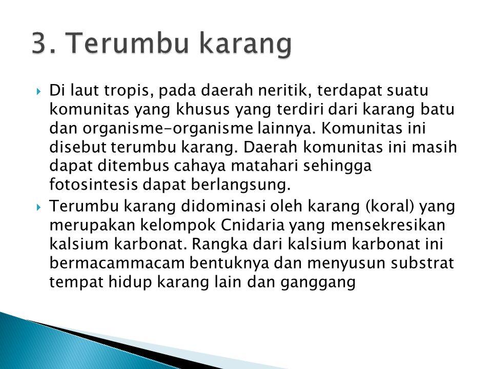 3. Terumbu karang