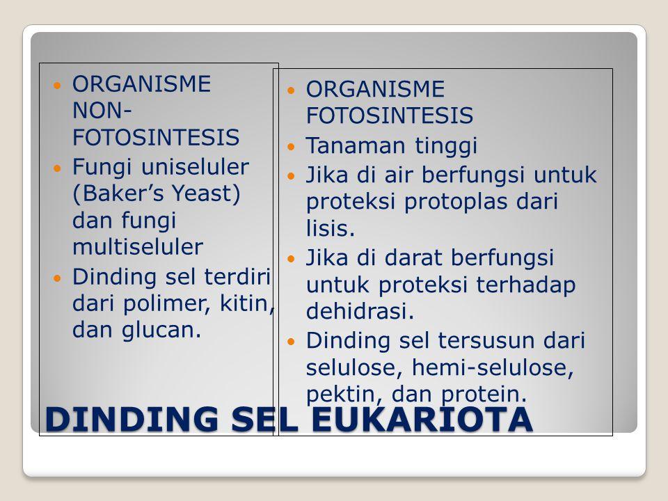 DINDING SEL EUKARIOTA ORGANISME NON- FOTOSINTESIS
