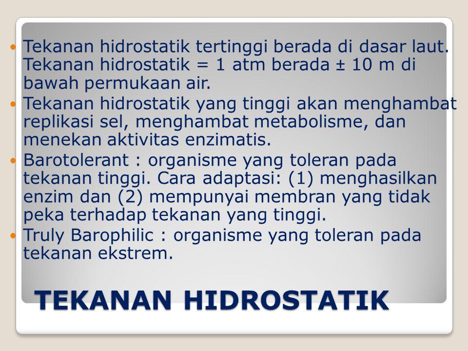 Tekanan hidrostatik tertinggi berada di dasar laut