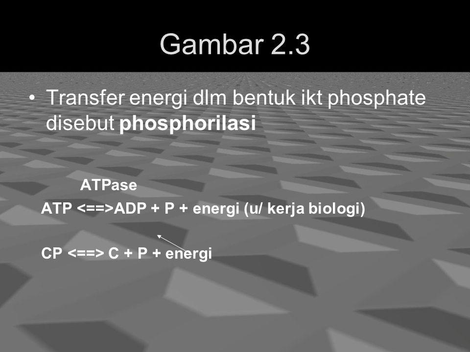Gambar 2.3 Transfer energi dlm bentuk ikt phosphate disebut phosphorilasi. ATPase. ATP <==>ADP + P + energi (u/ kerja biologi)