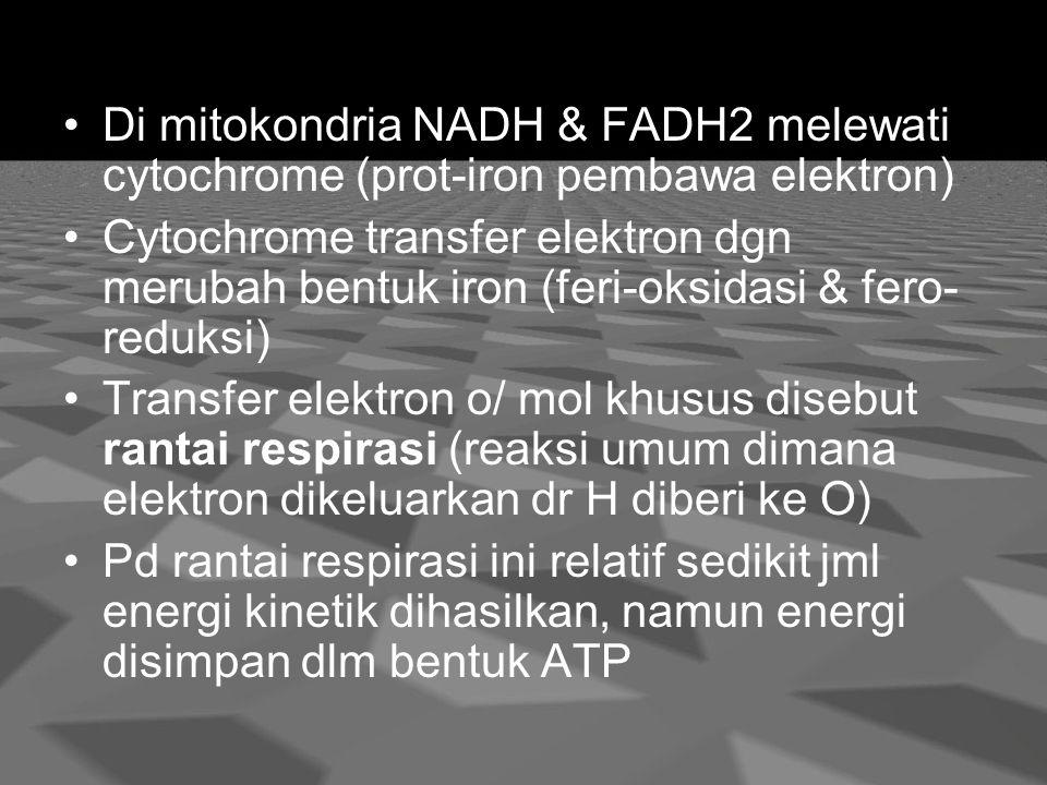 Di mitokondria NADH & FADH2 melewati cytochrome (prot-iron pembawa elektron)