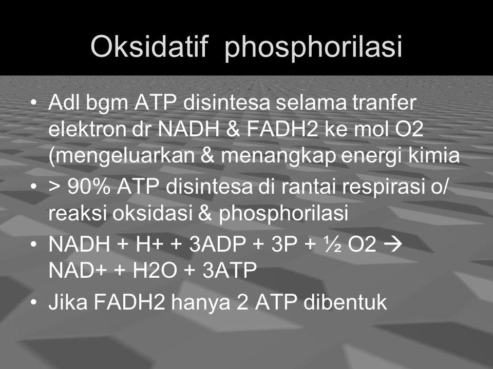 Oksidatif phosphorilasi