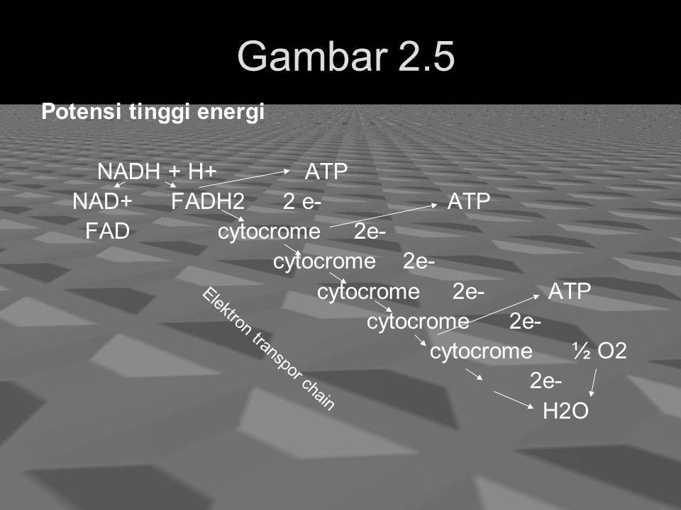 Gambar 2.5 Potensi tinggi energi NADH + H+ ATP NAD+ FADH2 2 e- ATP