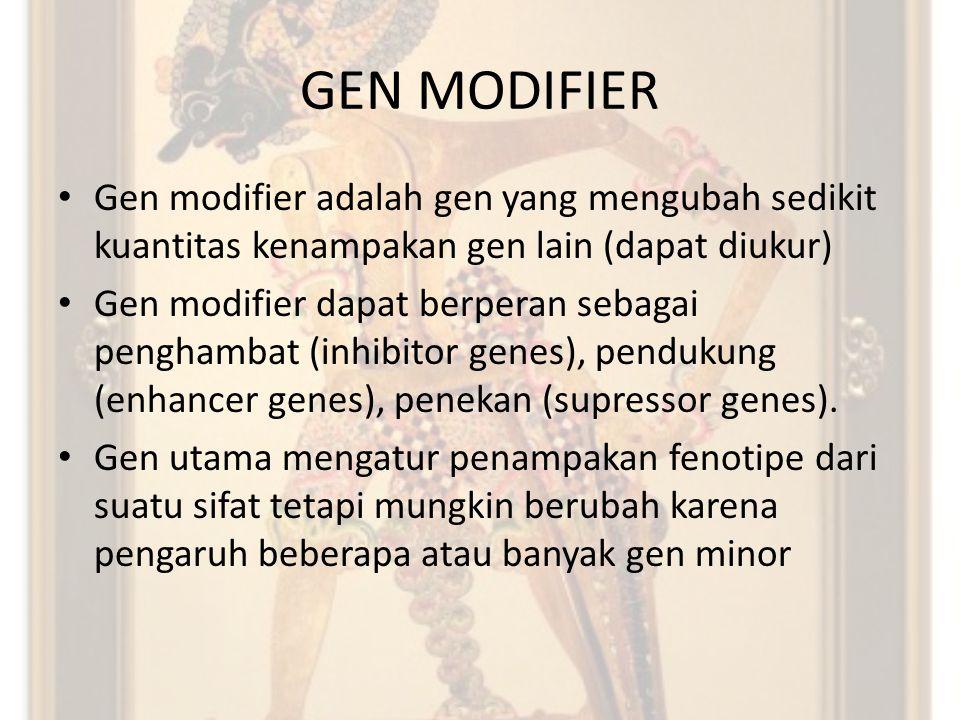 GEN MODIFIER Gen modifier adalah gen yang mengubah sedikit kuantitas kenampakan gen lain (dapat diukur)