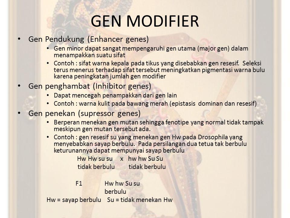 GEN MODIFIER Gen Pendukung (Enhancer genes)