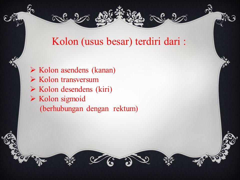 Kolon (usus besar) terdiri dari :