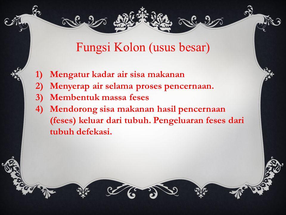 Fungsi Kolon (usus besar)