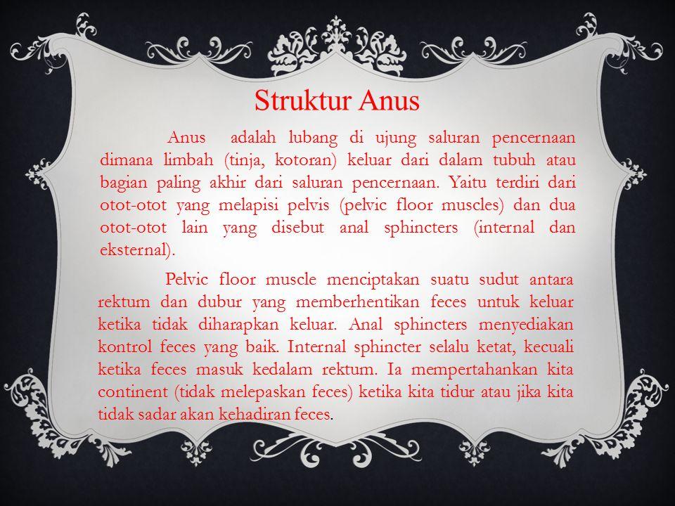 Struktur Anus