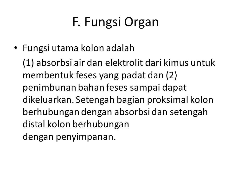 F. Fungsi Organ Fungsi utama kolon adalah