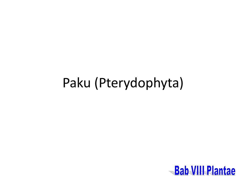 Paku (Pterydophyta) Bab VIII Plantae