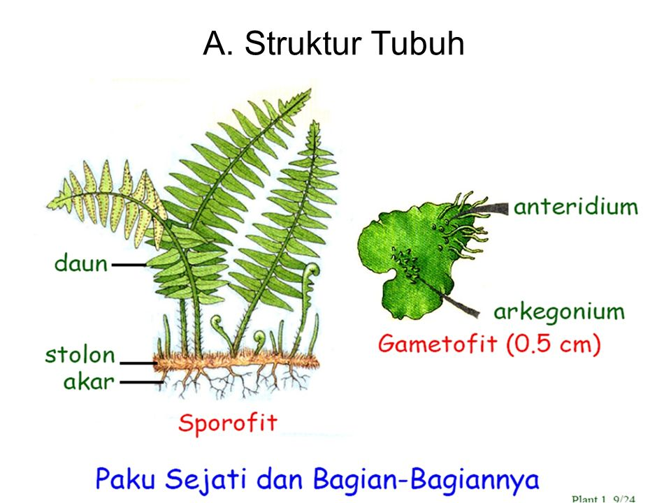 A. Struktur Tubuh
