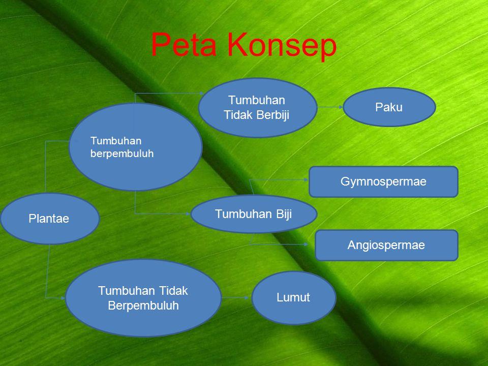 Peta Konsep Tumbuhan Tidak Berbiji Paku Gymnospermae Tumbuhan Biji