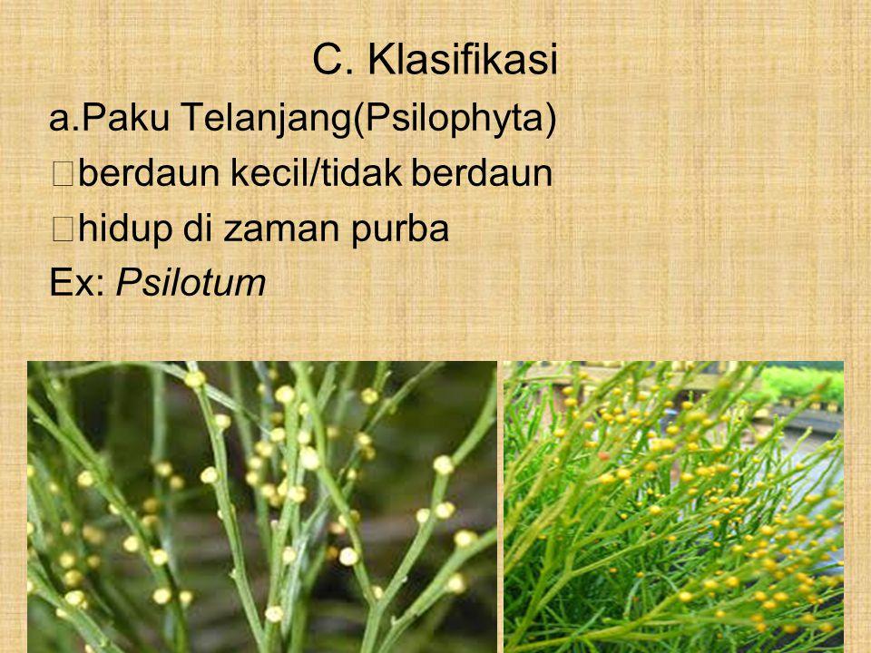 C. Klasifikasi Paku Telanjang(Psilophyta) berdaun kecil/tidak berdaun