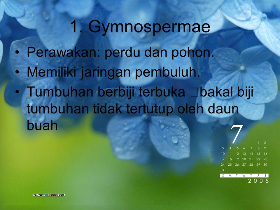 1. Gymnospermae Perawakan: perdu dan pohon.