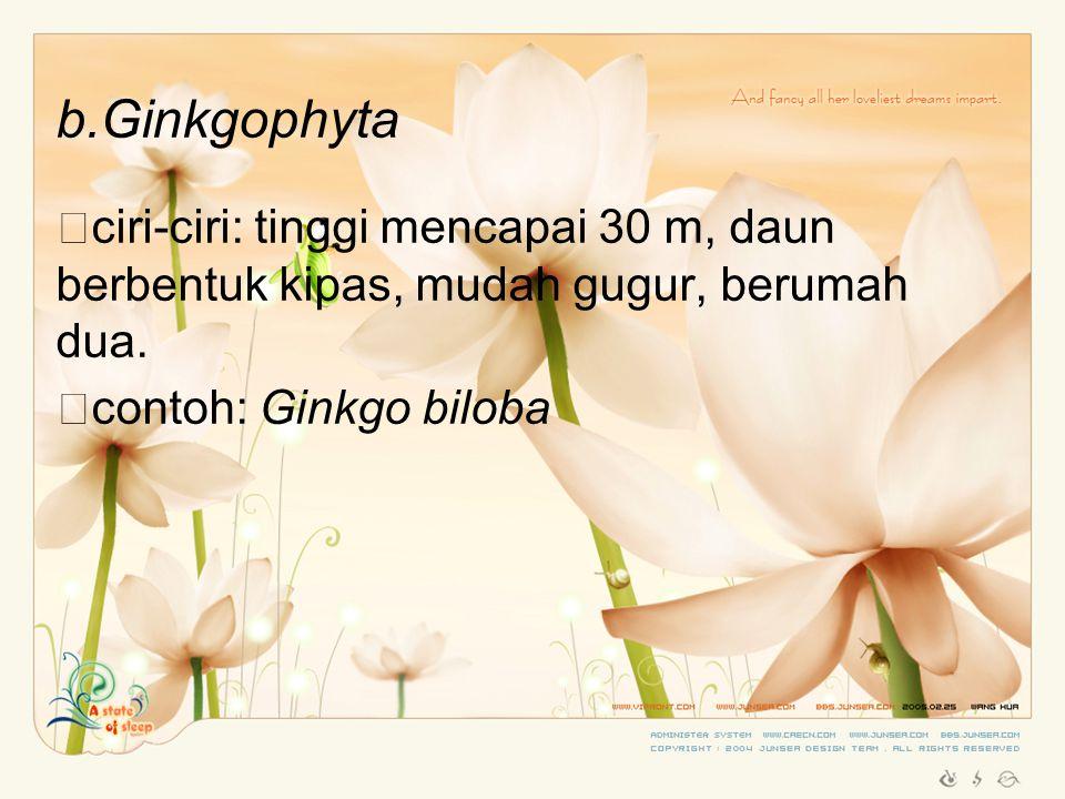 b.Ginkgophyta ciri-ciri: tinggi mencapai 30 m, daun berbentuk kipas, mudah gugur, berumah dua.