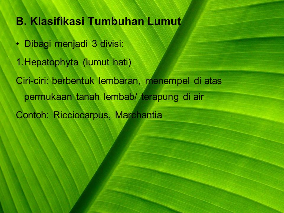B. Klasifikasi Tumbuhan Lumut
