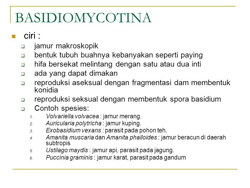BASIDIOMYCOTINA ciri : jamur makroskopik