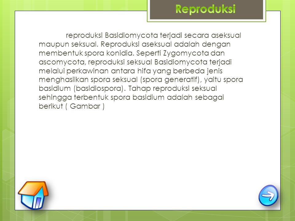 Reproduksi